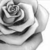 Rose90