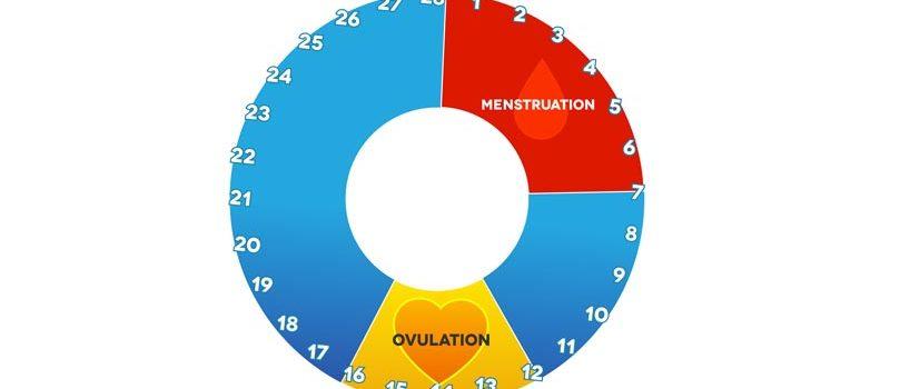 Kvindens ægløsningscyklus