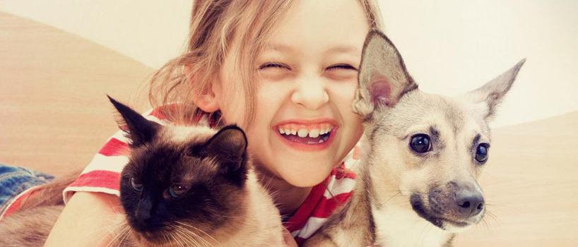 Allergi kæledyr